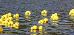 pa-duck3-150x150